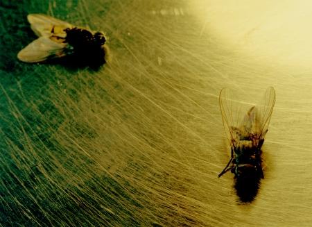 dos moscas